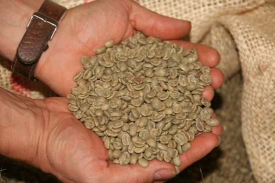 a person holding green coffee beans