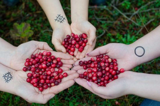 People sharing cranberries